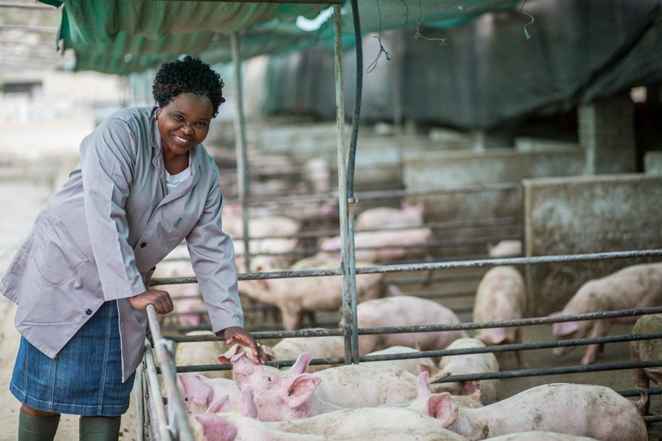 How to make millions in pig farming - The Anna Phosa story