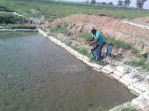 Earthern Pond