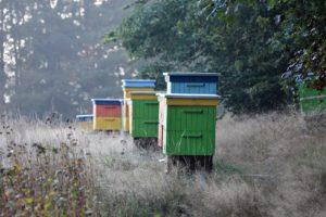 beekeeping business in Africa