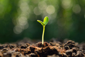 Seed Funding For Your Startup In Africa
